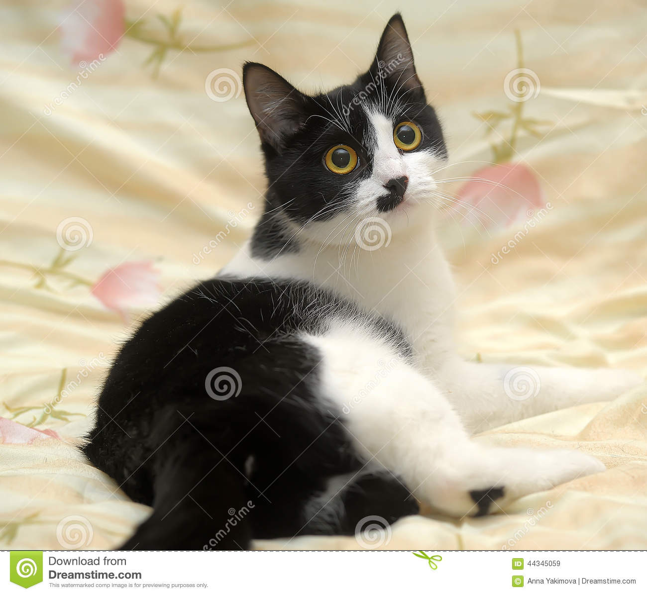 Funny Black And White Cat Stock Photo Image 44345059