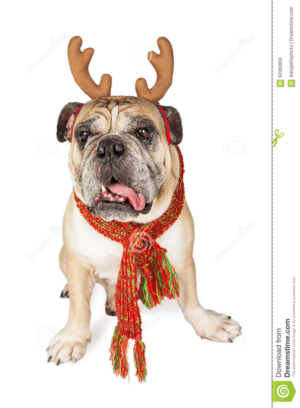 funny christmas bulldog - photo #12