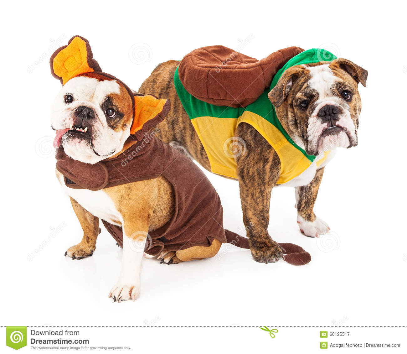 Funny Bulldogs In Halloween Costumes Stock Photo - Image: 60125517