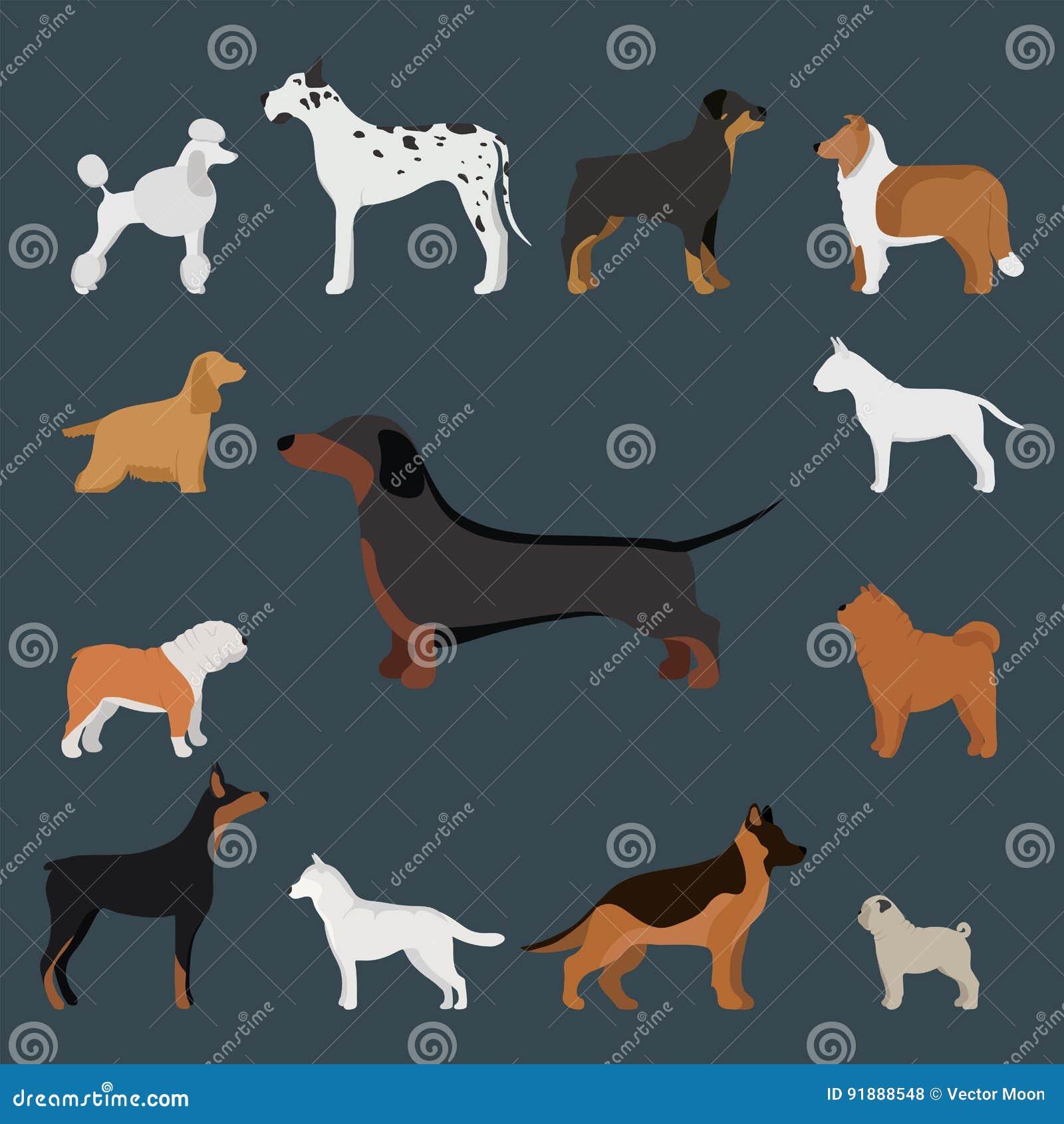 Funny cartoon dog character bread in cartoon style vector illustration.