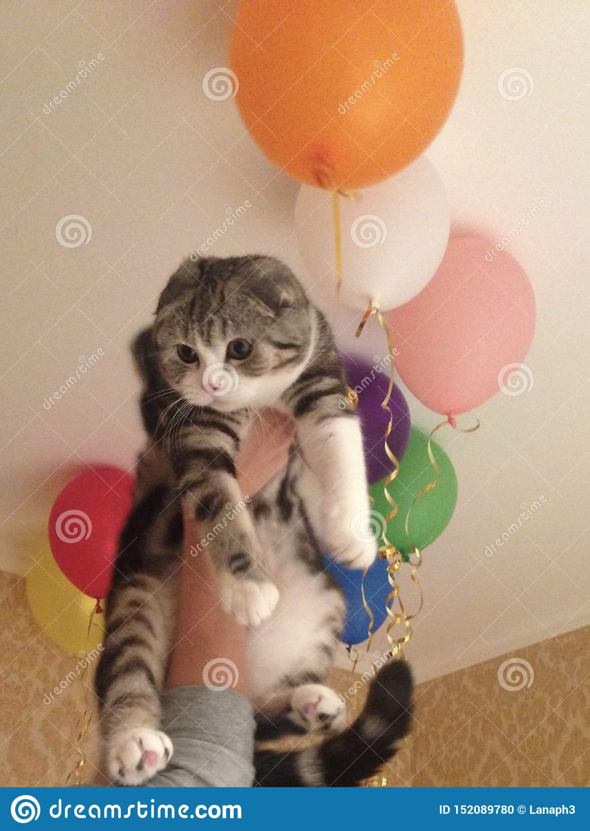 funny cat with balloons