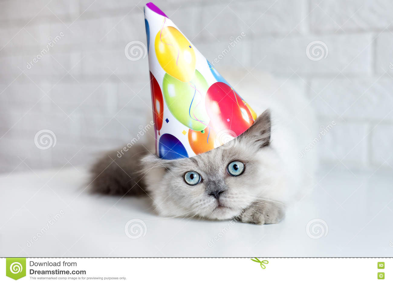Fluffy Cat In A Birthday Hat