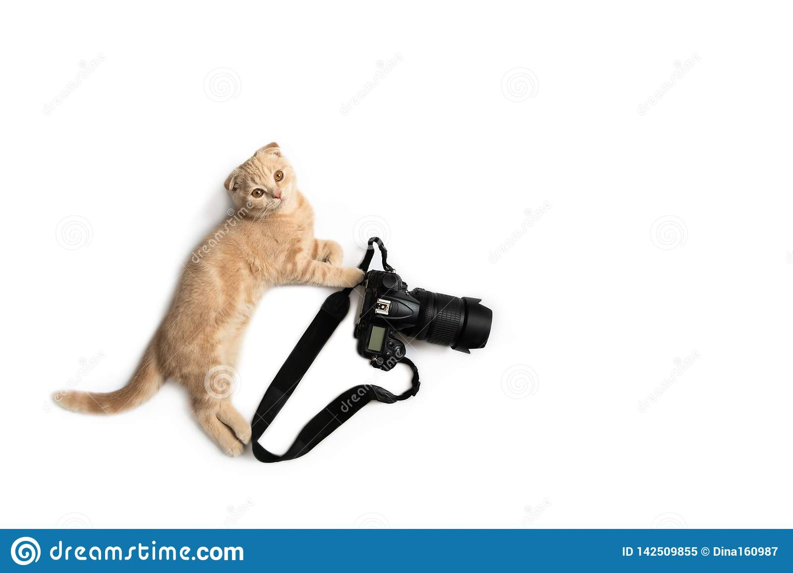 Funny cat with camera isolated on white background. Photographer profession. Creative concept for World photography day, banner,
