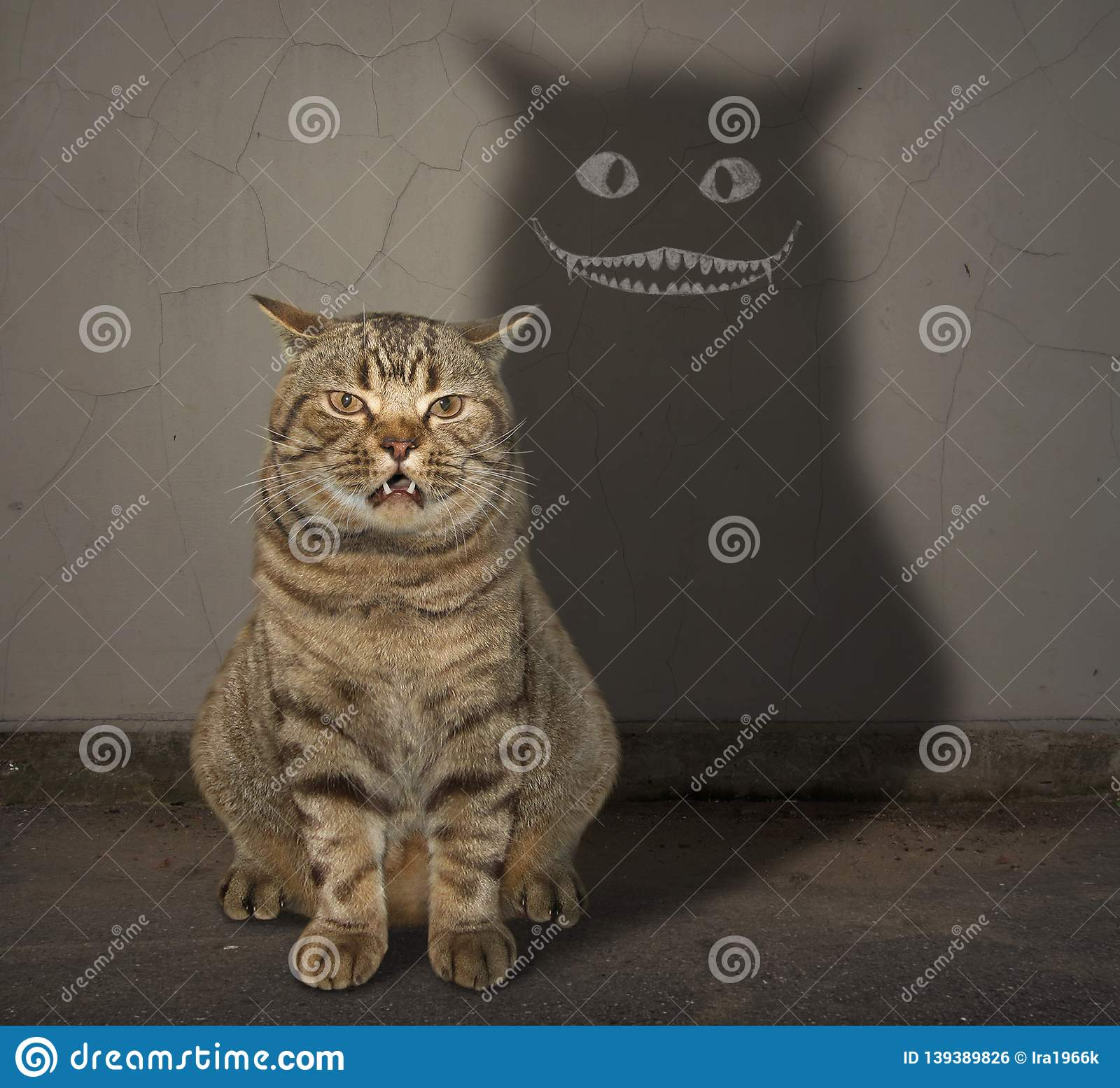 Cat and its shadow on the wall