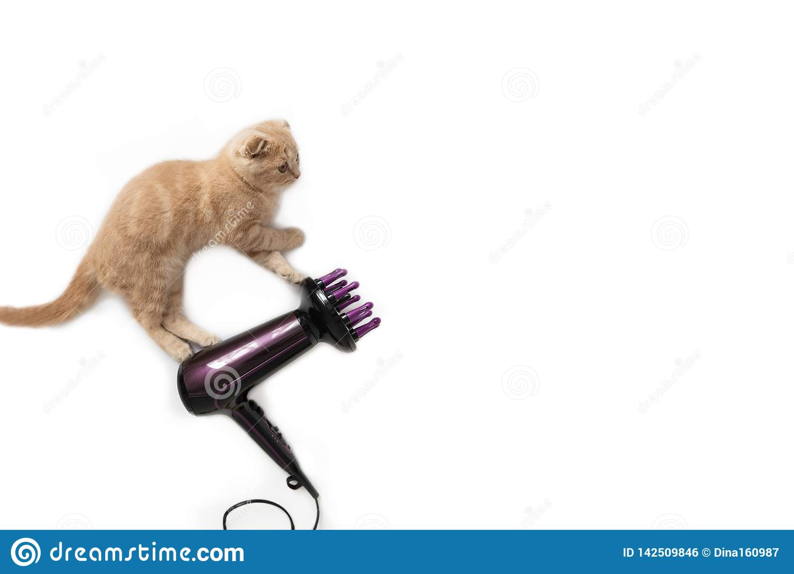 Funny cat flying on the hair dryer, isolated on white background. Copy space. Holiday card creative concept, banner, advertising