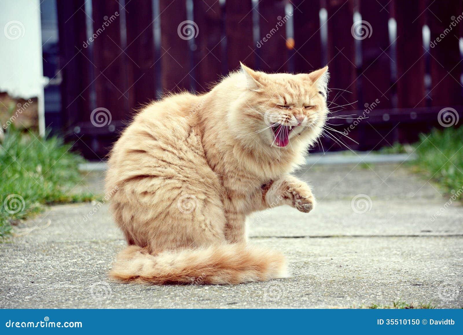 Funny Cat Stock Photo Image 35510150
