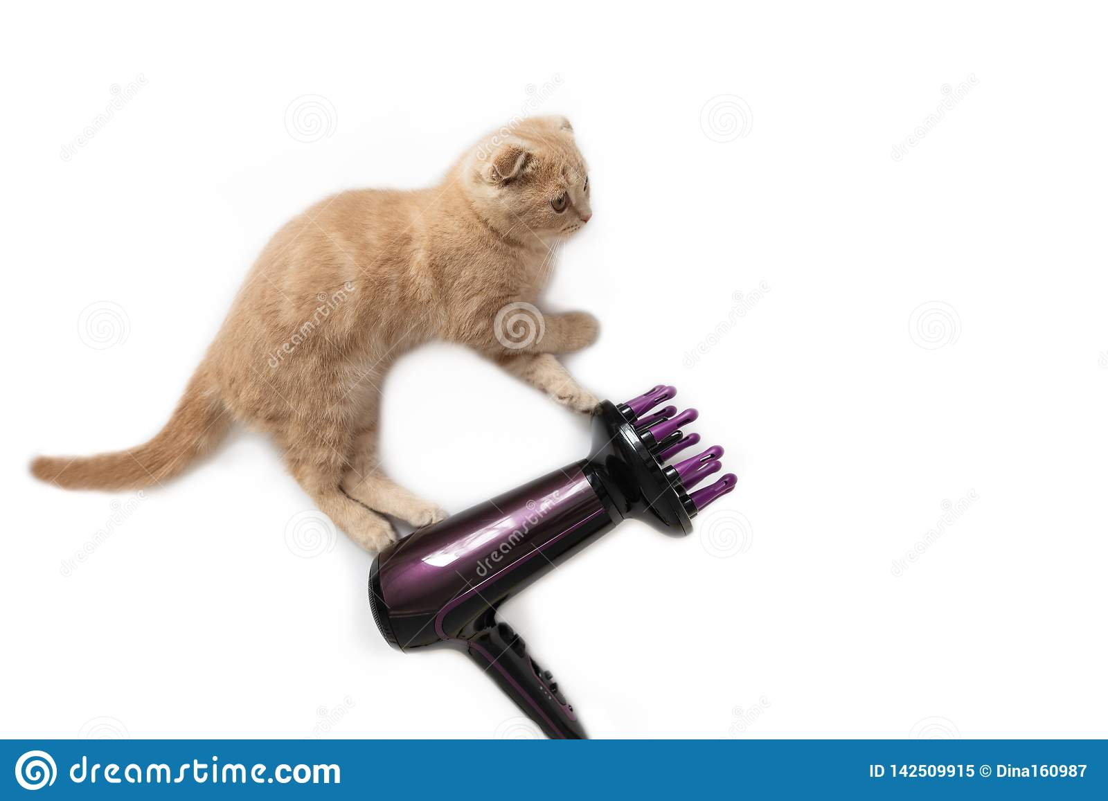 Funny cat hairstylist with hair dryer, isolated on white background. Copy space. Holiday card creative concept, banner,