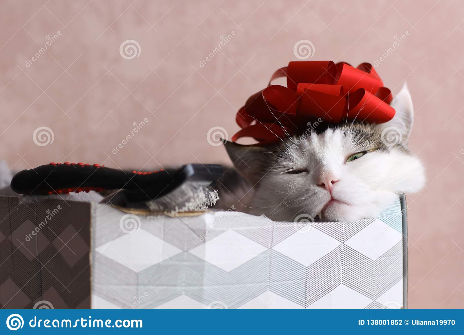 Funny cat photo sleeping in gift box with red bow on head