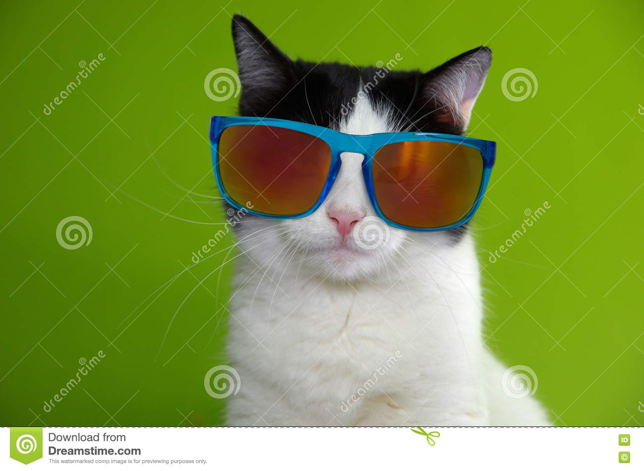 Portrait Of Cat Wearing Sunglasses Stock Image ...