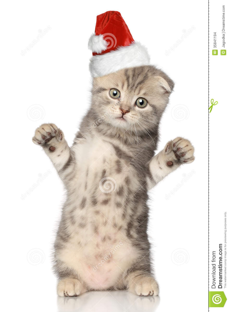 Funny Cat In Santa Christmas Hat Stock Images Image