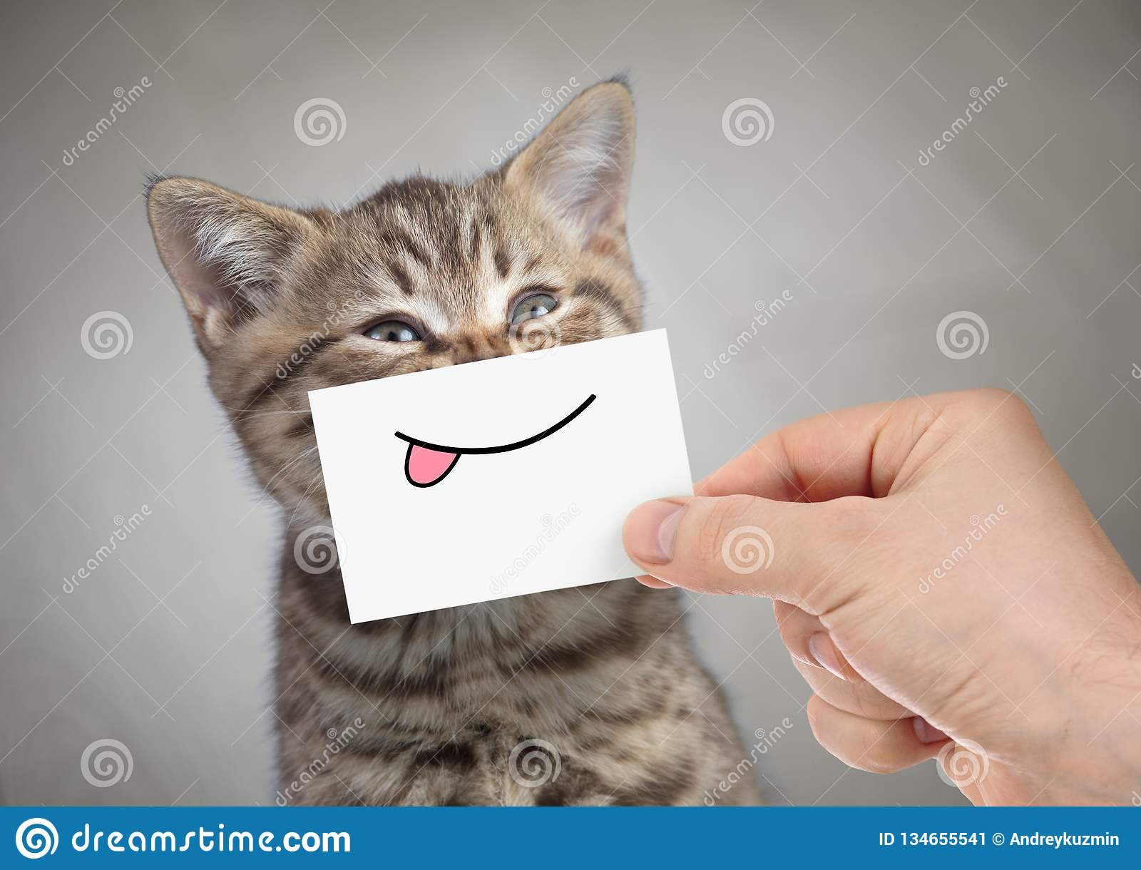 Funny cat smiling with tongue