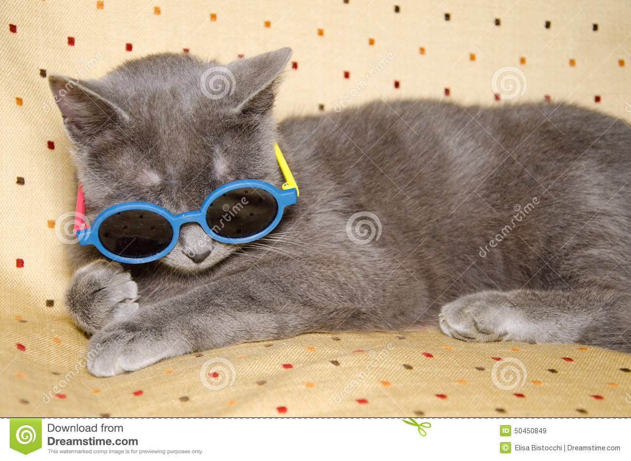 Funny Cat With Sunglasses Stock Photo Image 50450849