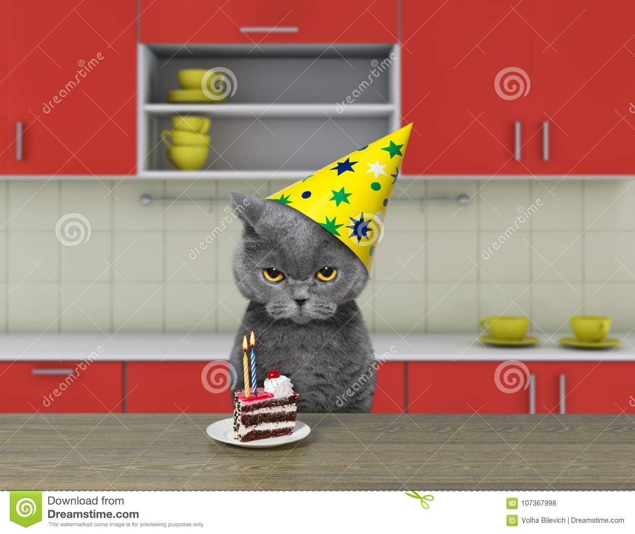 Funny cat waiting to eat chocolate cake