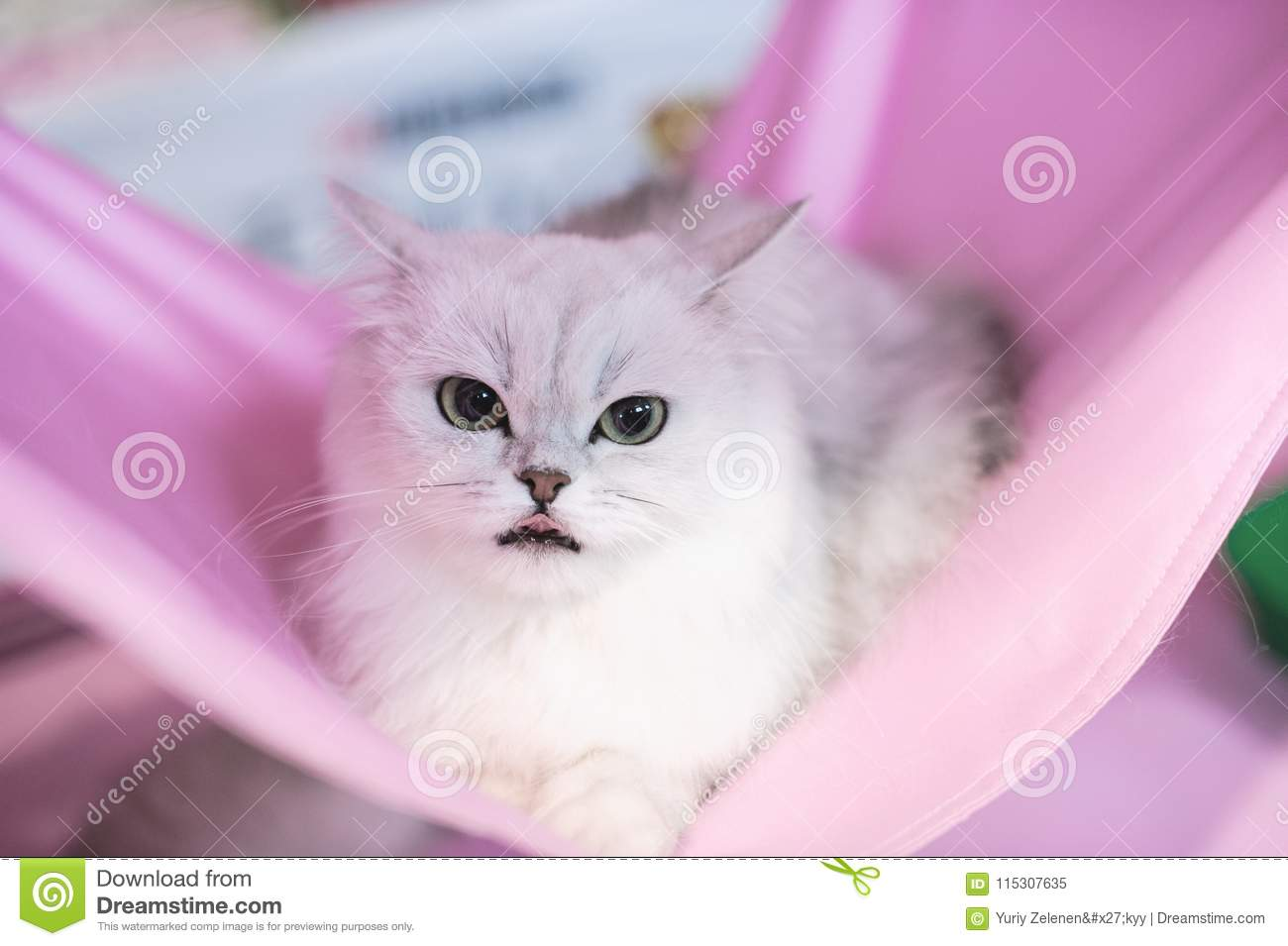 Funny cats in the basket on the cloth