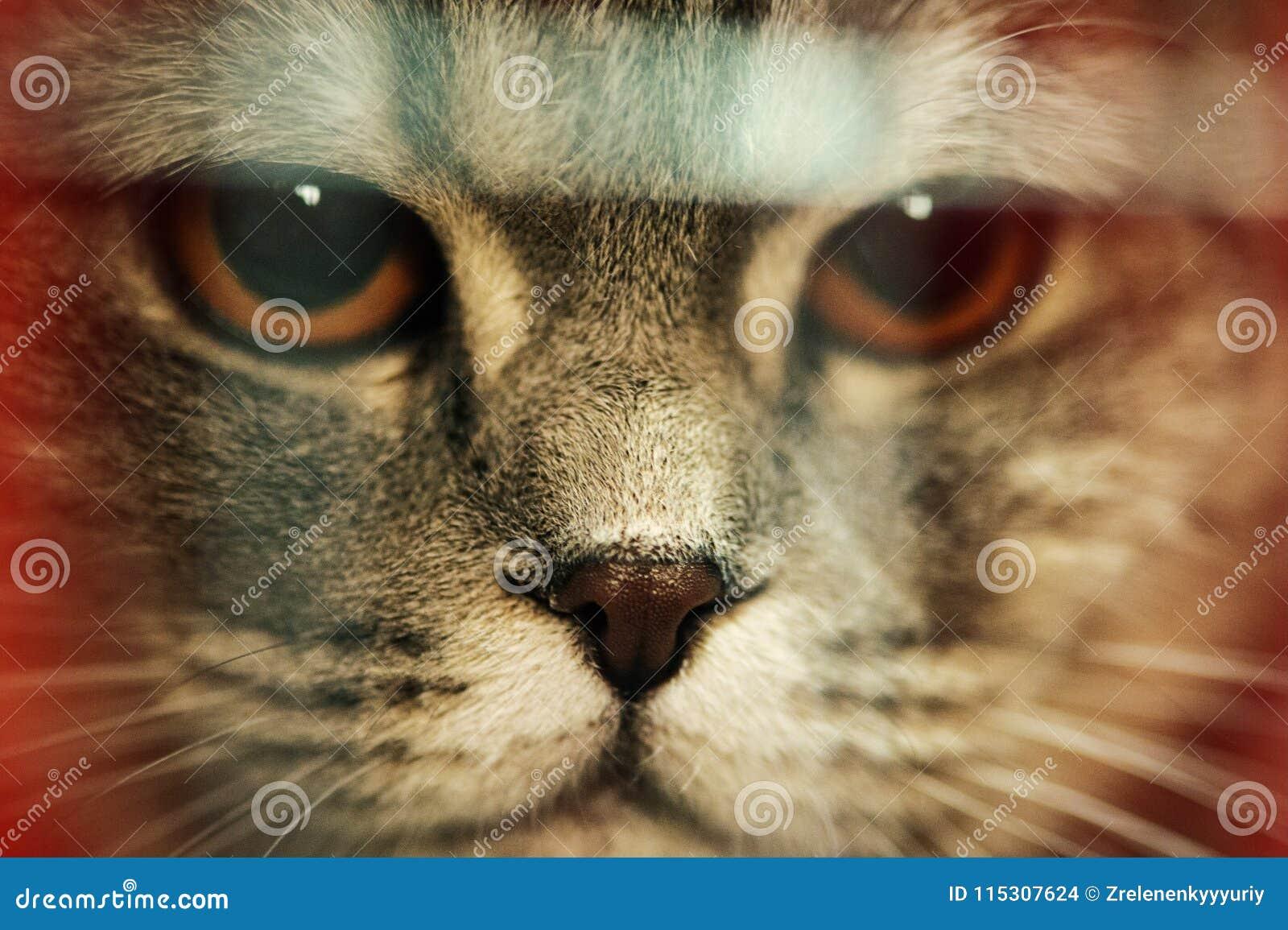 Funny cats close up