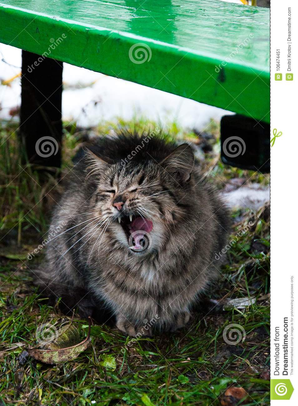 Funny cats after the rain