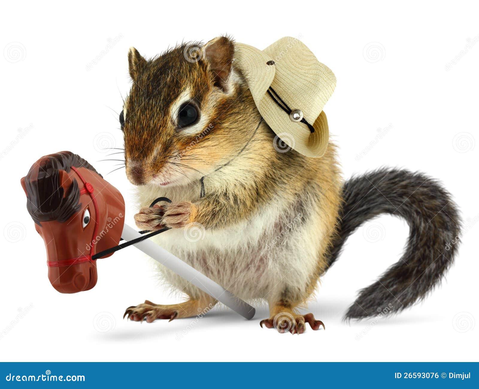Funny chipmunk cowboy