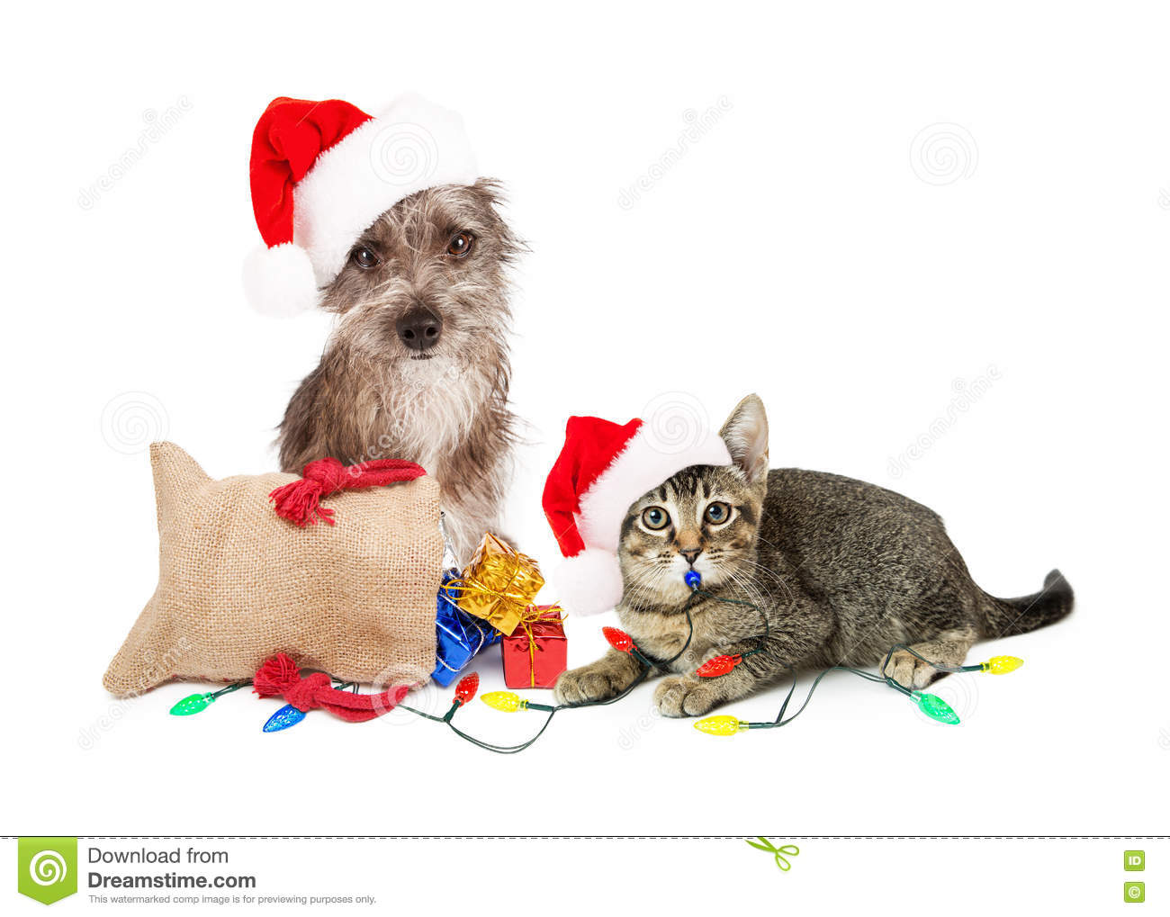 funny christmas dog and cat