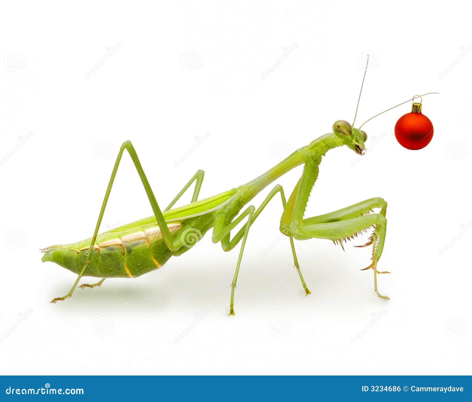 Praying Mantis Christmas Tree
