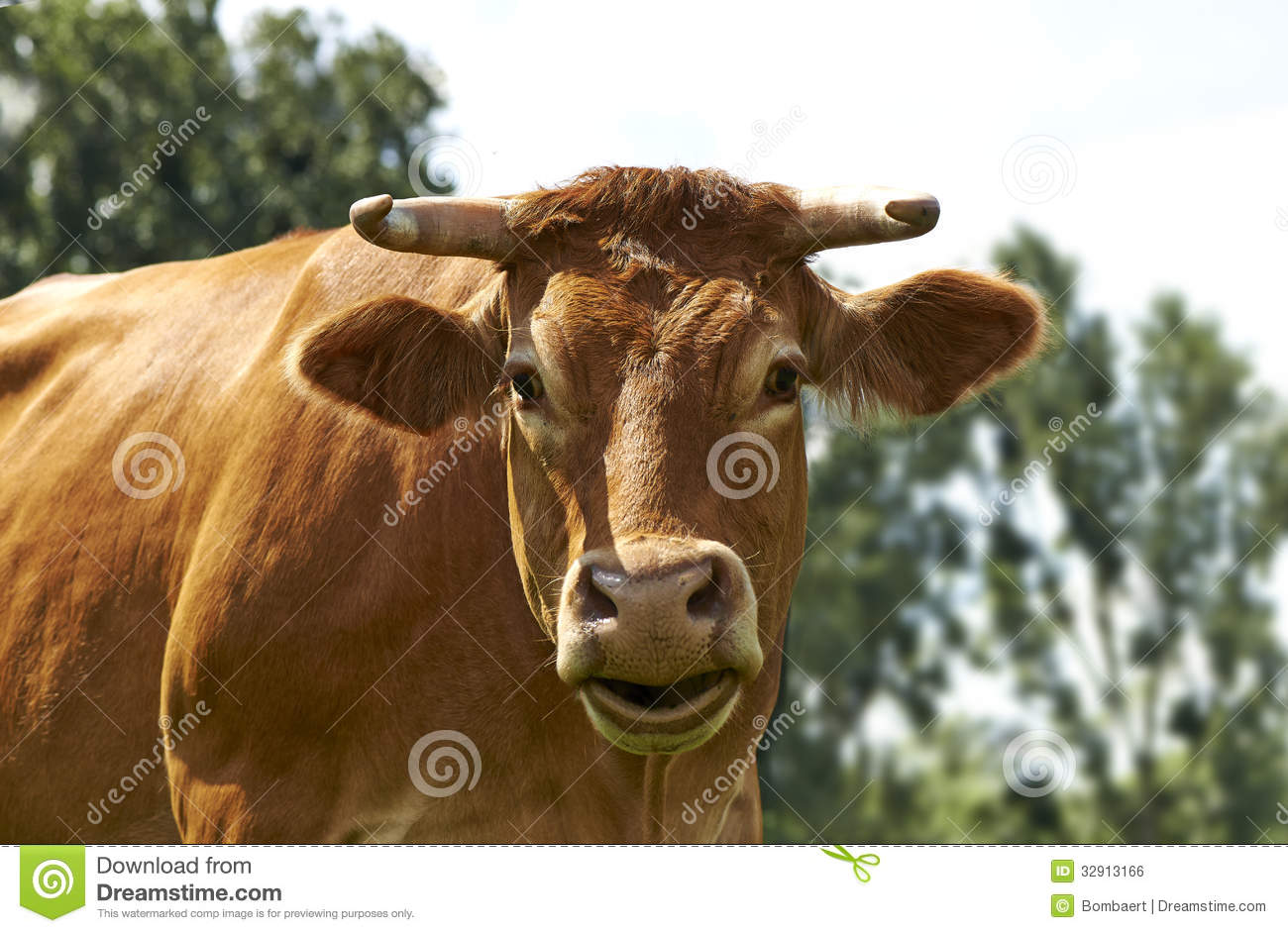Funny cow smiling - photo#25