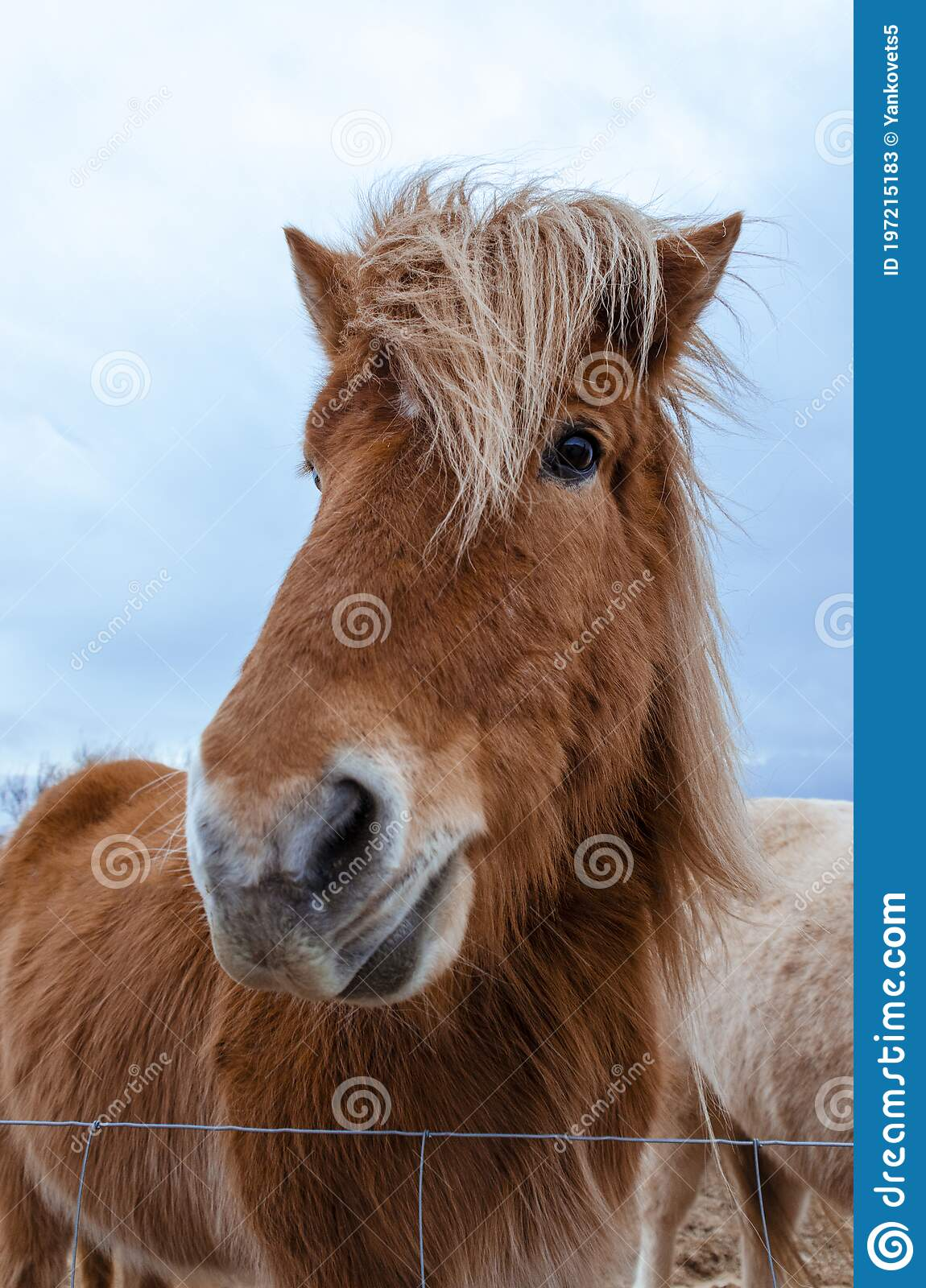 1 929 Horse Crazy Photos Free Royalty Free Stock Photos From Dreamstime