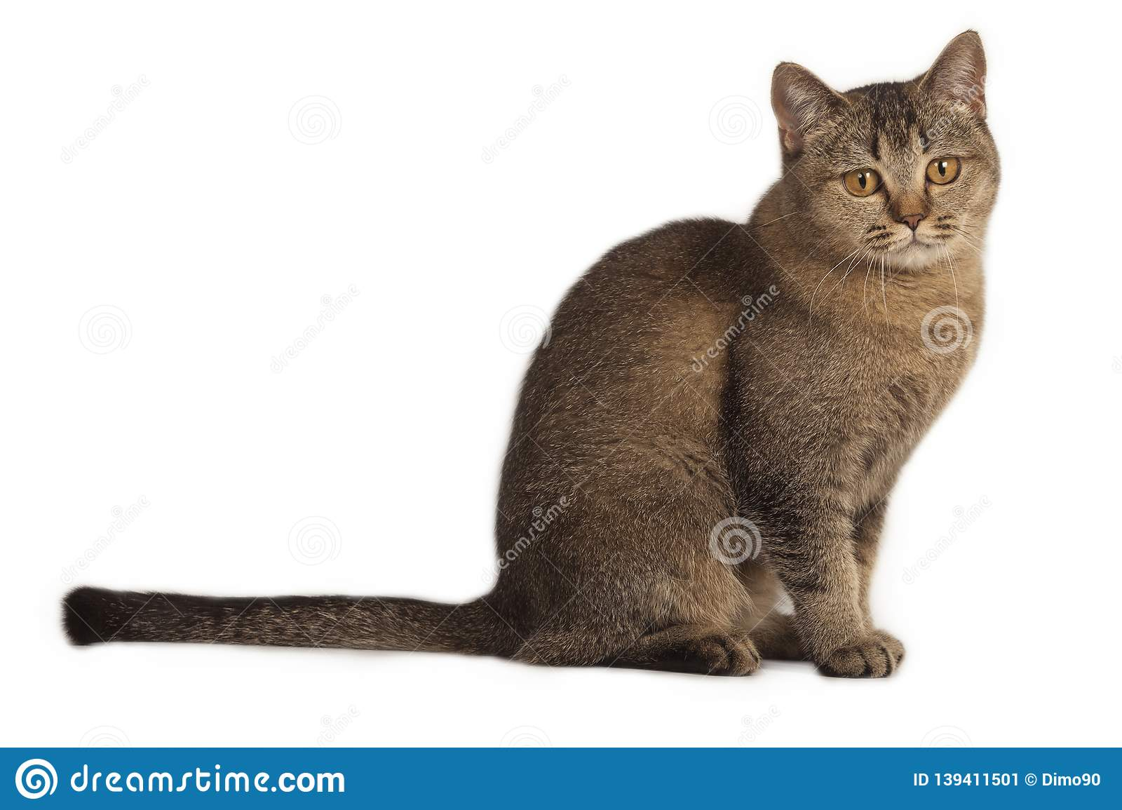 Funny Cute Cat Sitting On A White Background Stock Image