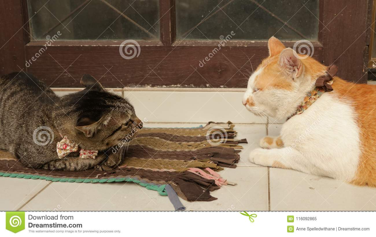 Funny Cute Cats Fighting