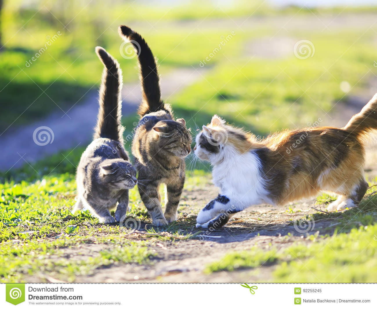 funny cute cats playing in the green grass attacking each other stock image image 92255245. Black Bedroom Furniture Sets. Home Design Ideas