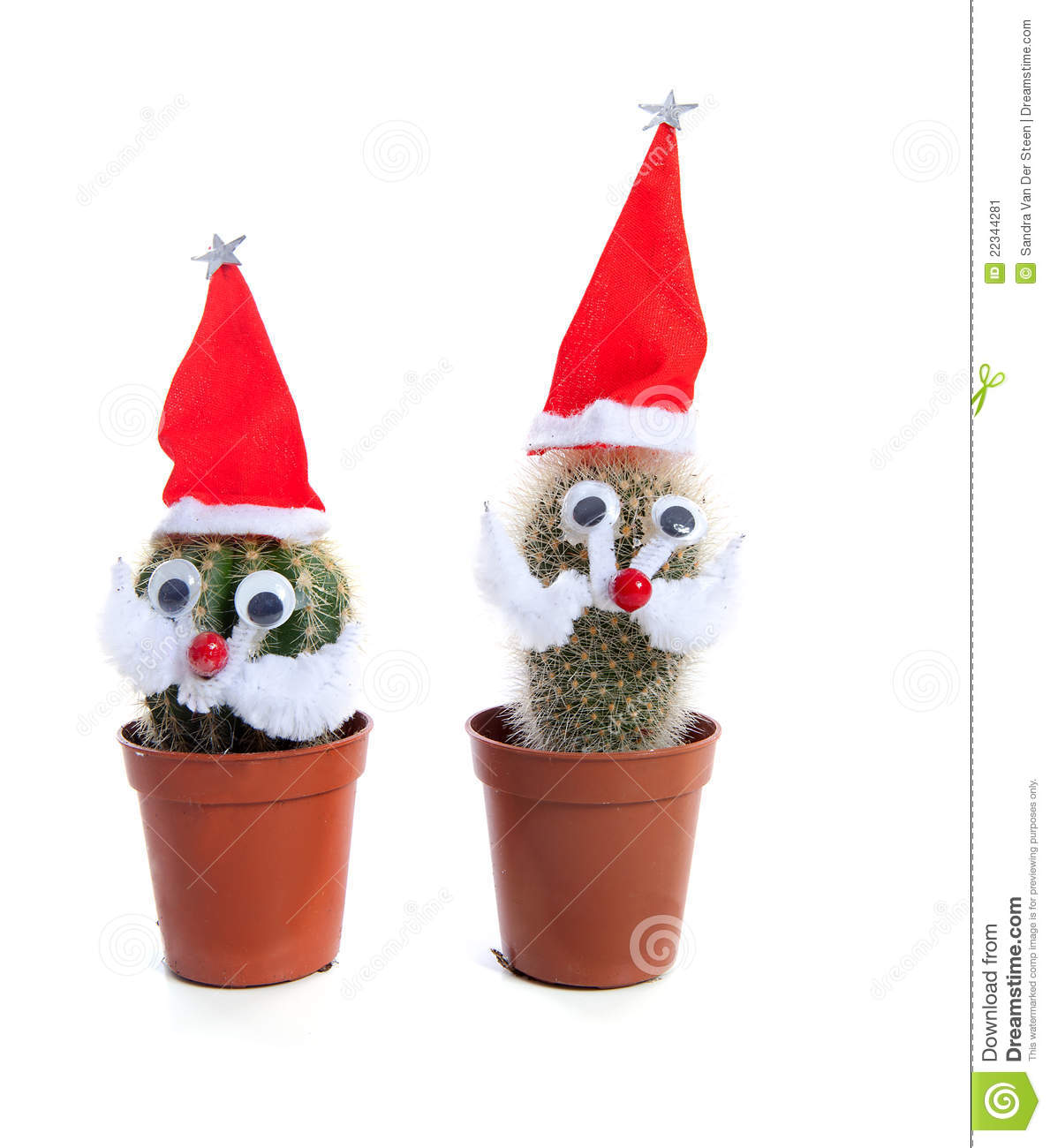 Cactus Decorated For Christmas: Funny Decorated Cactus Plants For Christmas Stock Image