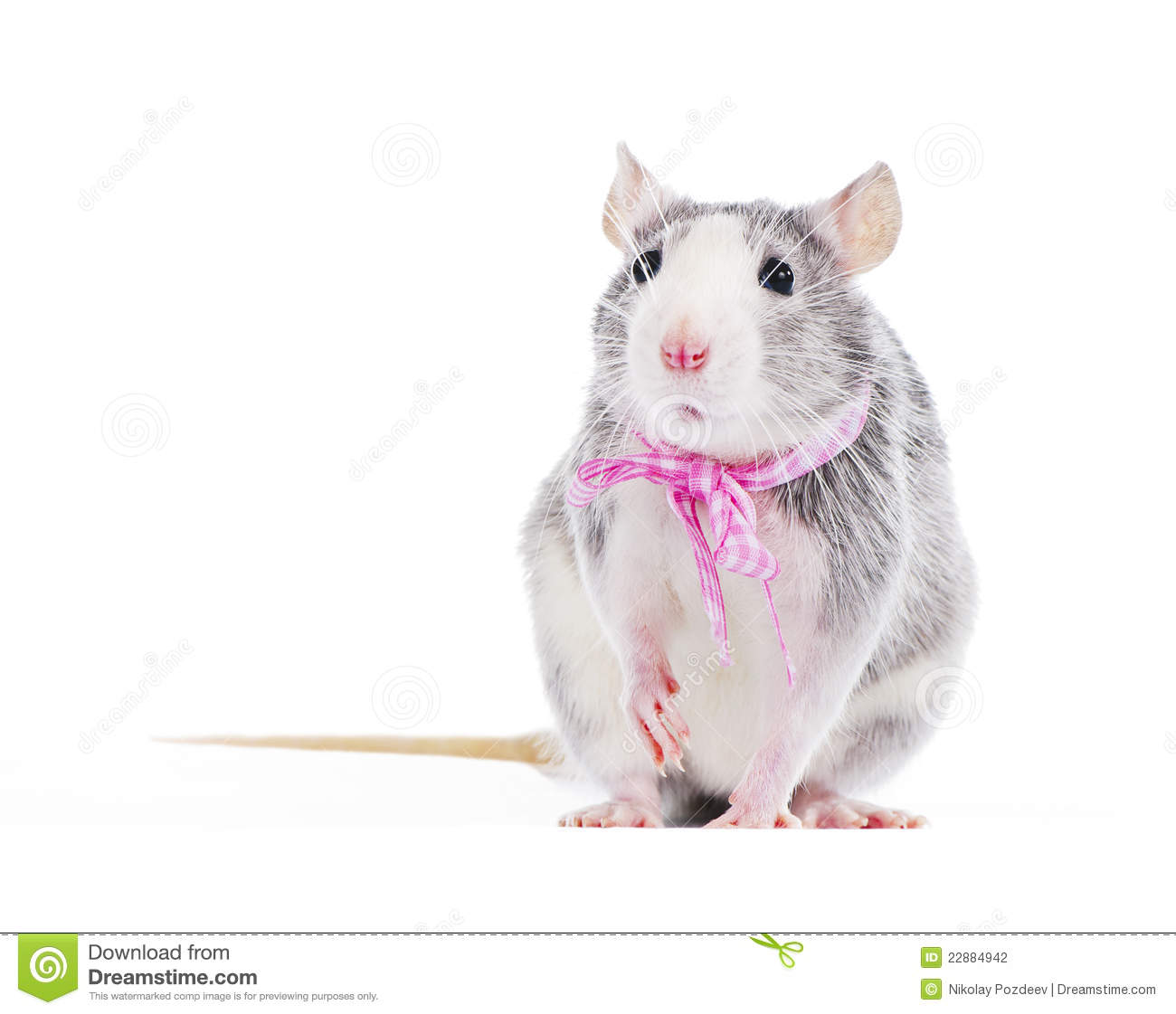 Funny decorative rat with pink bow Stock Photography