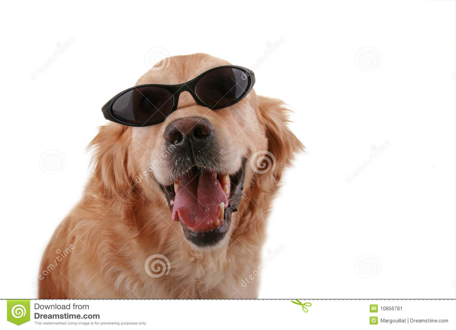 Funny Dog Stock Image Image 10856781