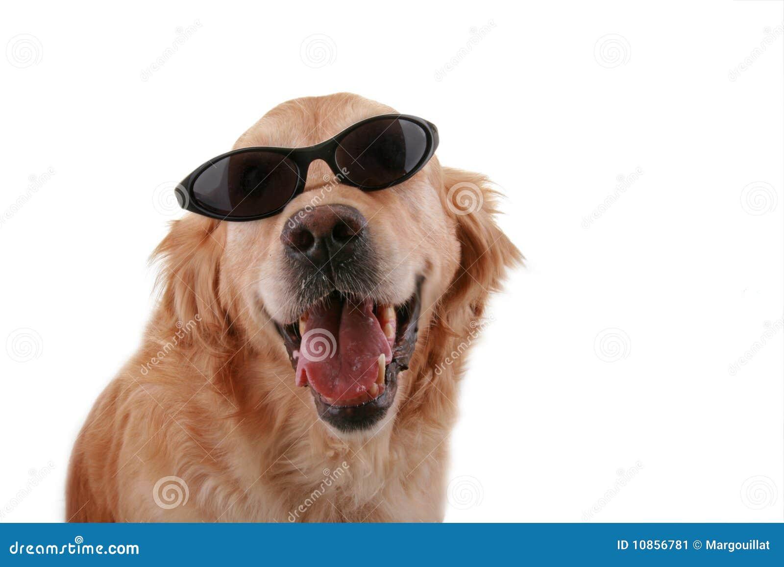Free Service Dog Id