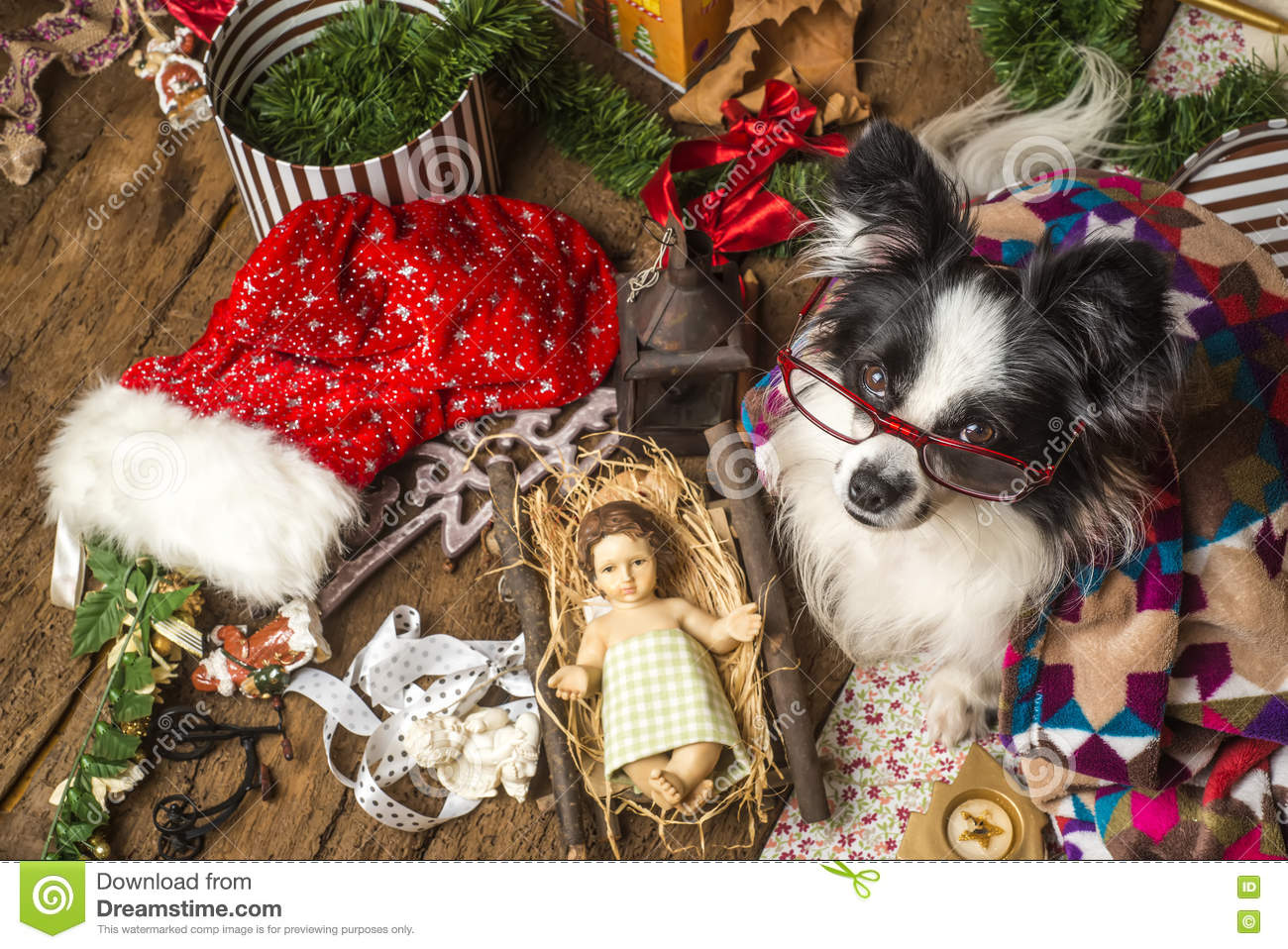 Funny dog Christmas card stock image. Image of cards - 78529837