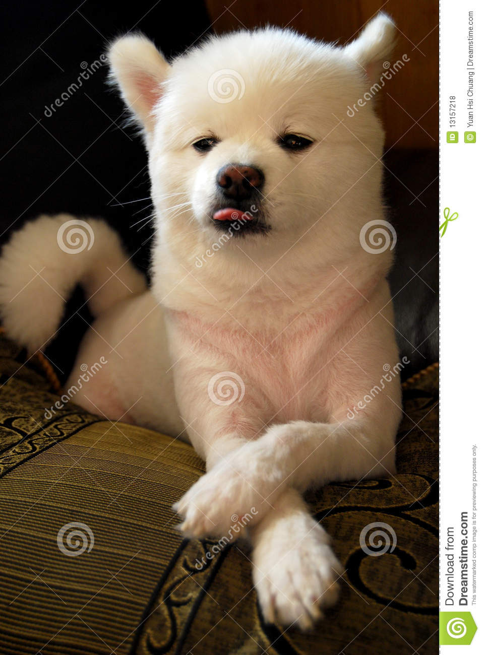 Funny Dog Face Expression Royalty Free Stock Photos