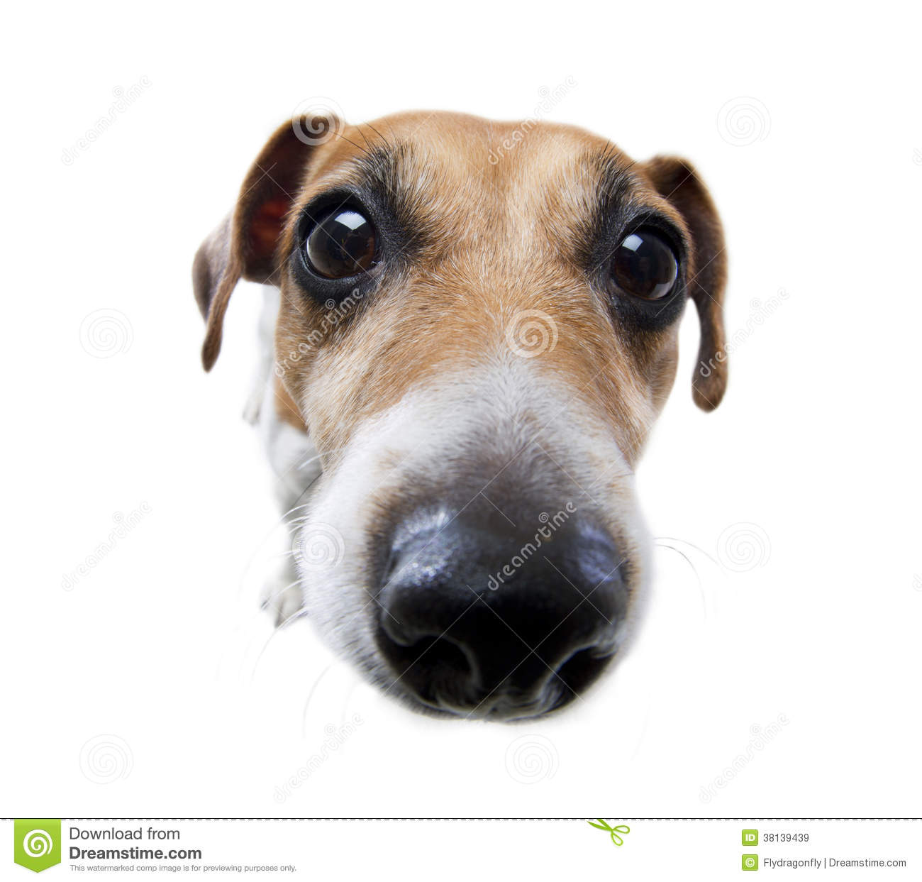 https://thumbs.dreamstime.com/z/funny-dog-nose-38139439.jpg