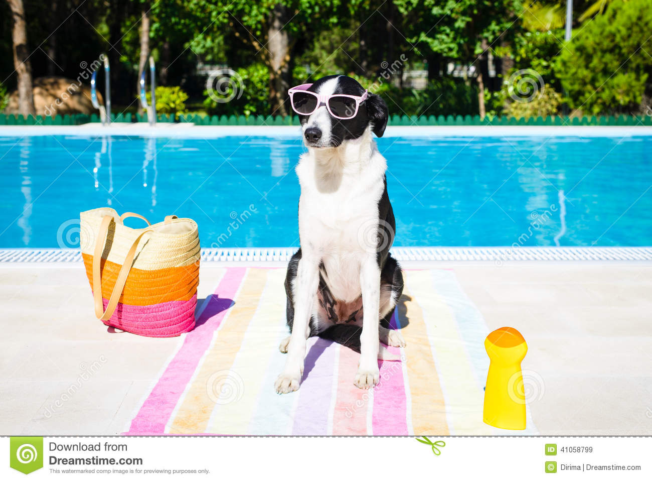 Funny Dog On Summer Vacation At Swimming Pool Stock Photo Image 41058799