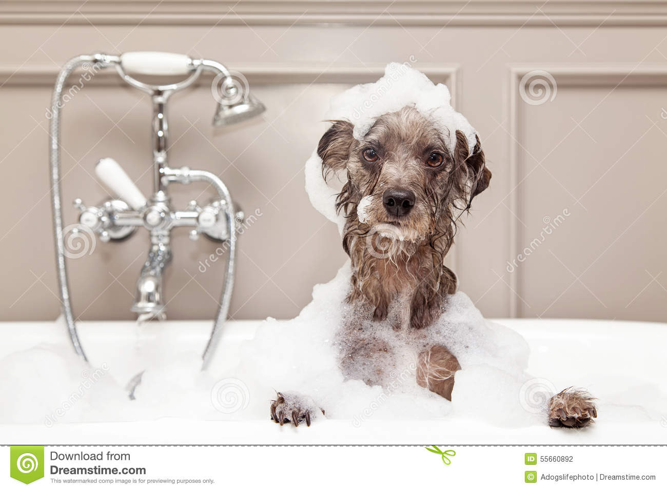 Funny Dog Taking Bubble Bath