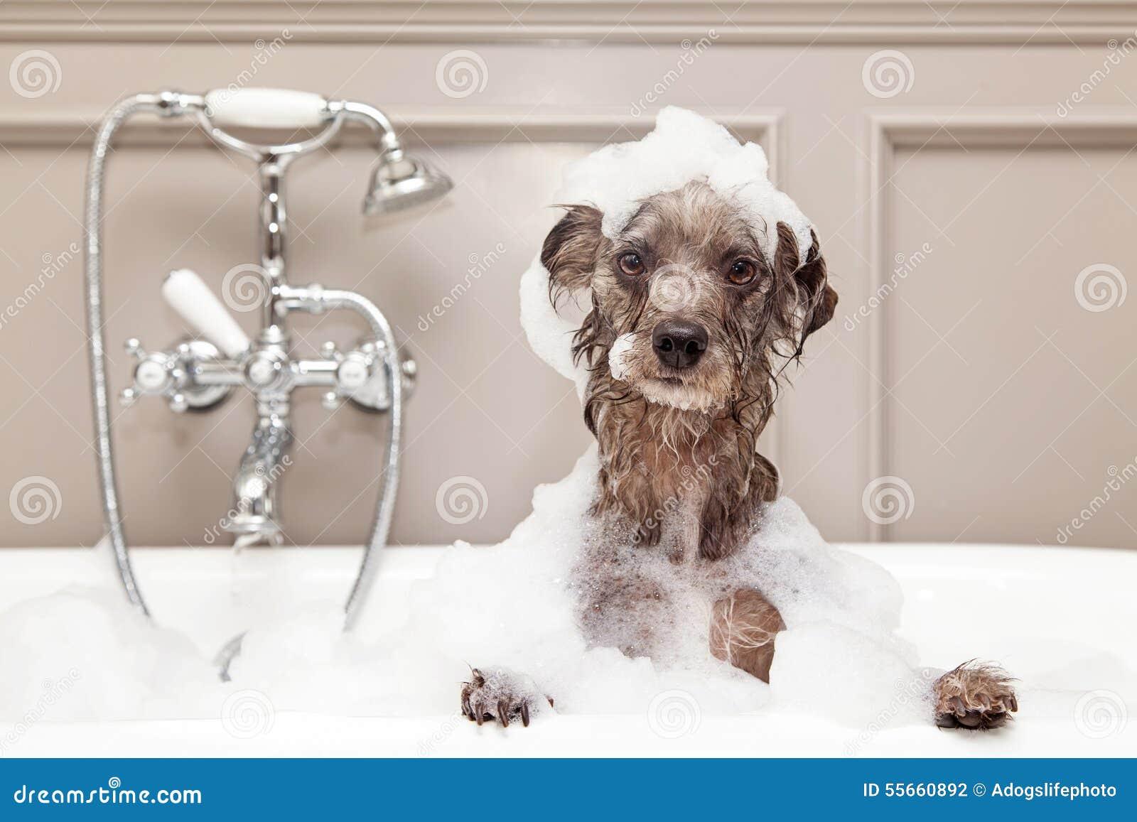 Funny Dog Taking Bubble Bath Stock Photo Image 55660892