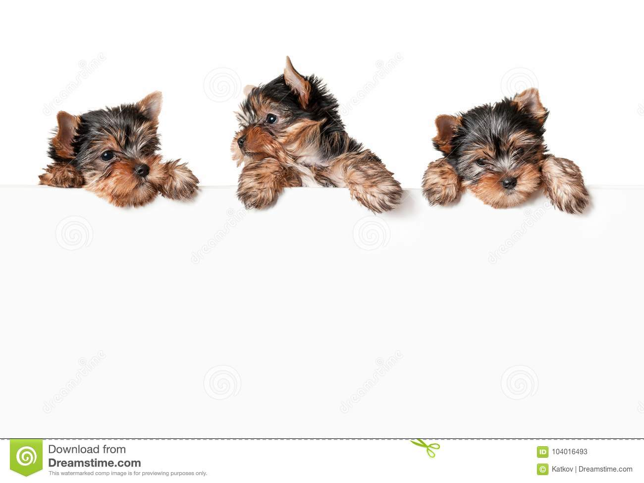 Funny Dogs With White Banner Stock Image Image Of Presentation Terrier 104016493