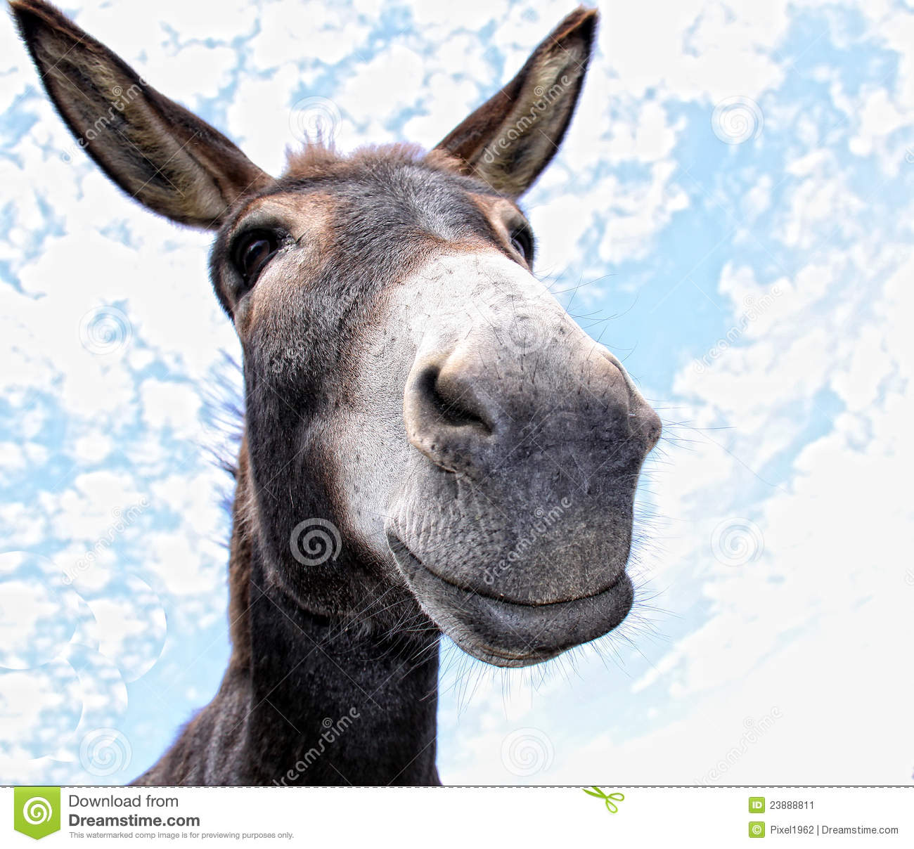Comical looking donkey looks in the cam with fun Donkey Bum
