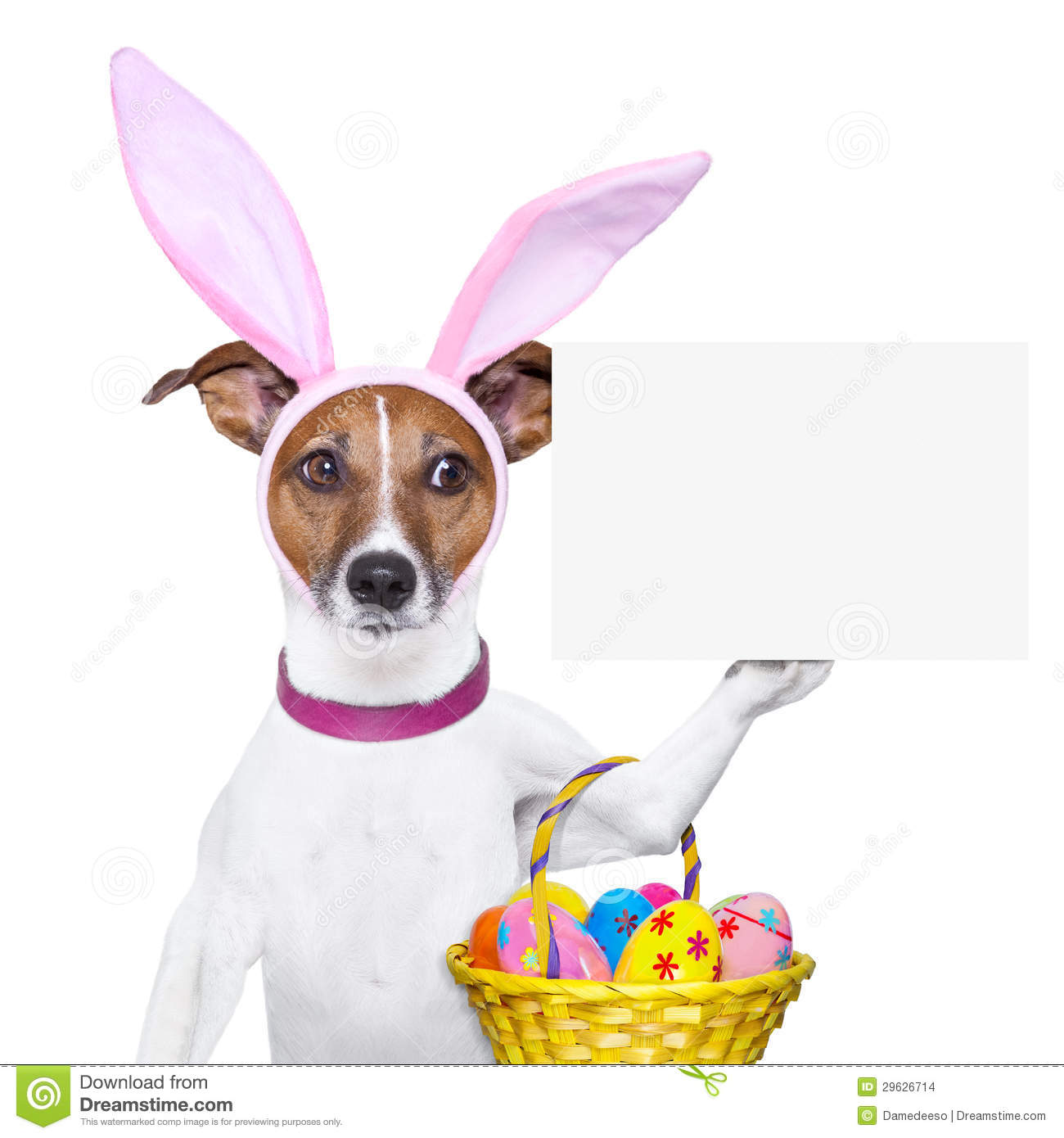 Funny easter dog stock photo. Image of animal, banner ...