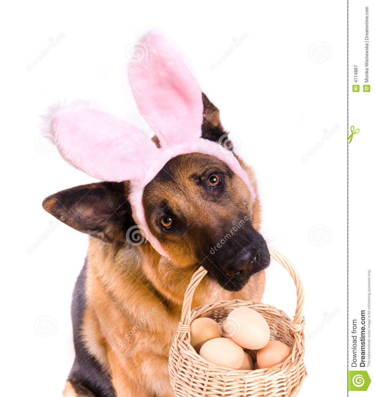 Download Funny Easter Dog With Basket Stock Image - Image of bunny, plush: 4114887