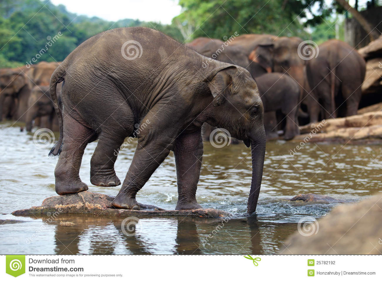 Funny Elephant Baby In Water Stock Photography - Image ...