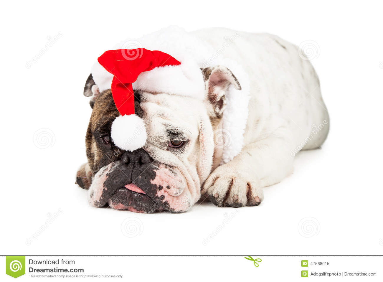 funny christmas bulldog - photo #31