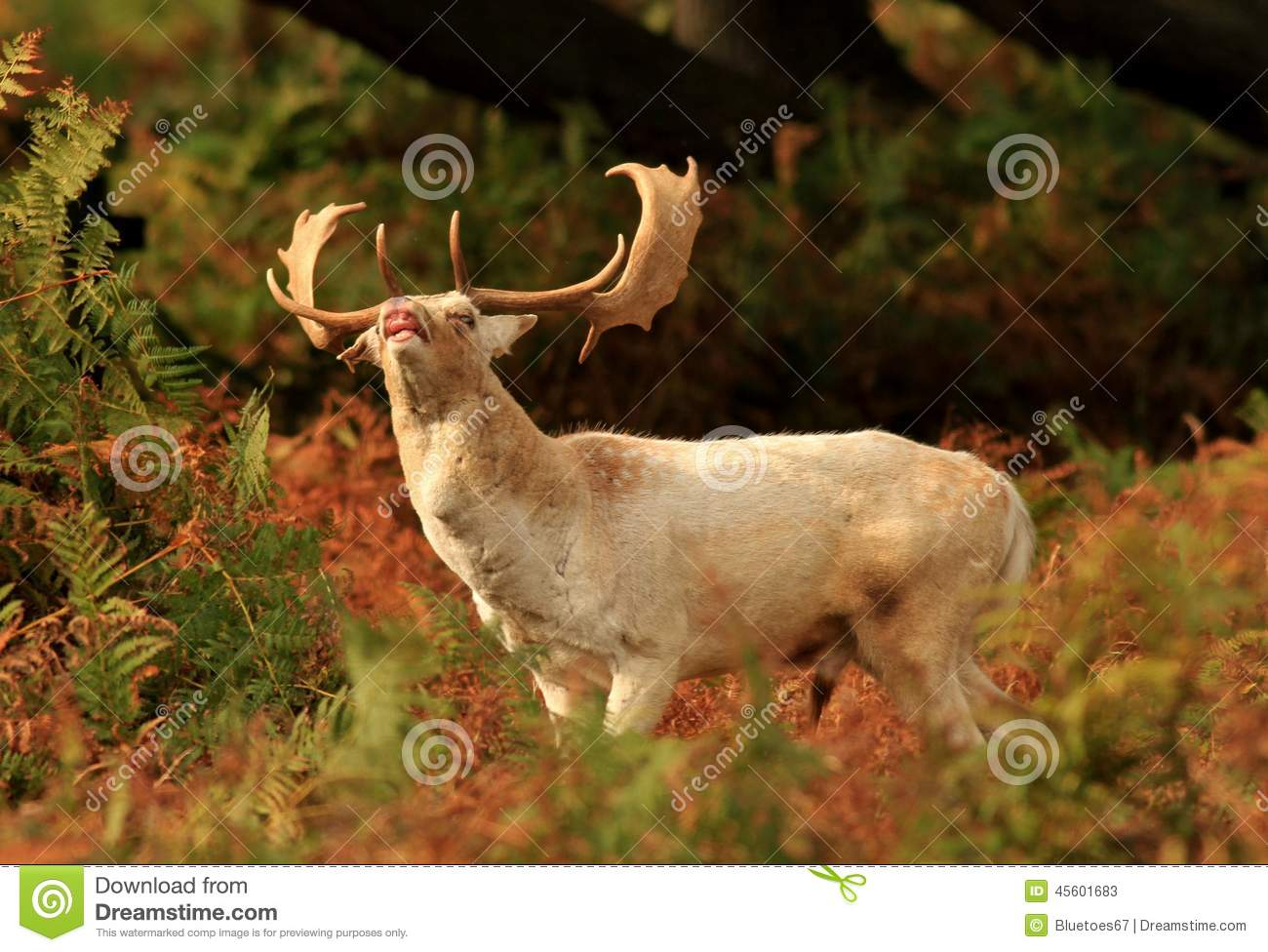 Funny Thank You Animation Funny Face Deer Stock ...