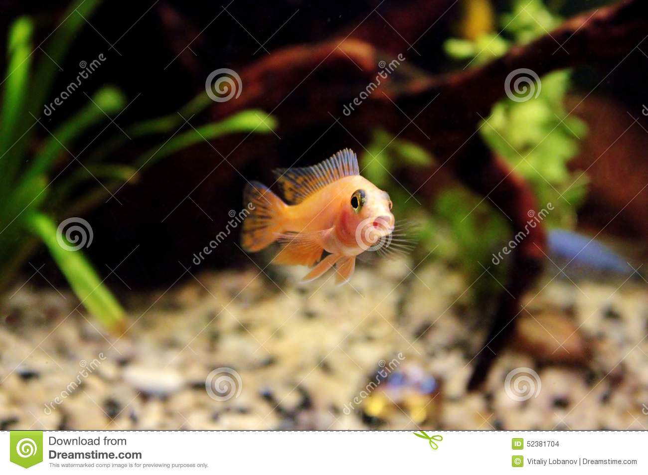 Funny fish sing the song stock photo image 52381704 for Funny fishing songs