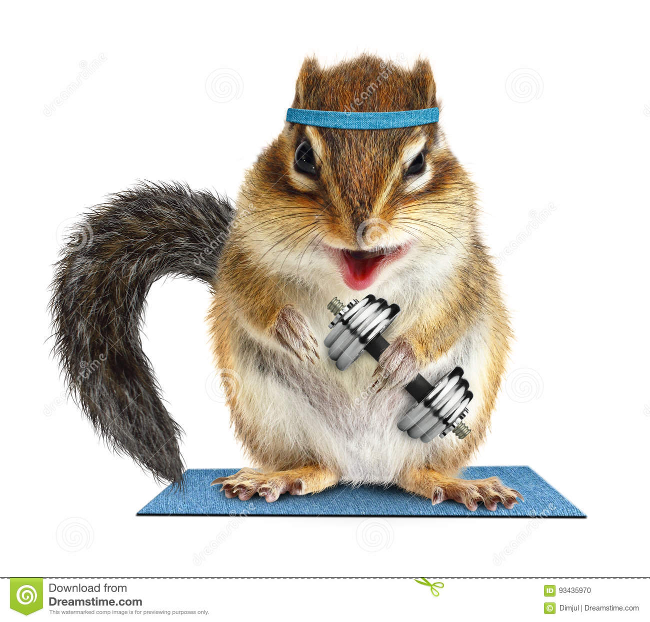 Funny fitness, animal chipmunk lifting dumbbell