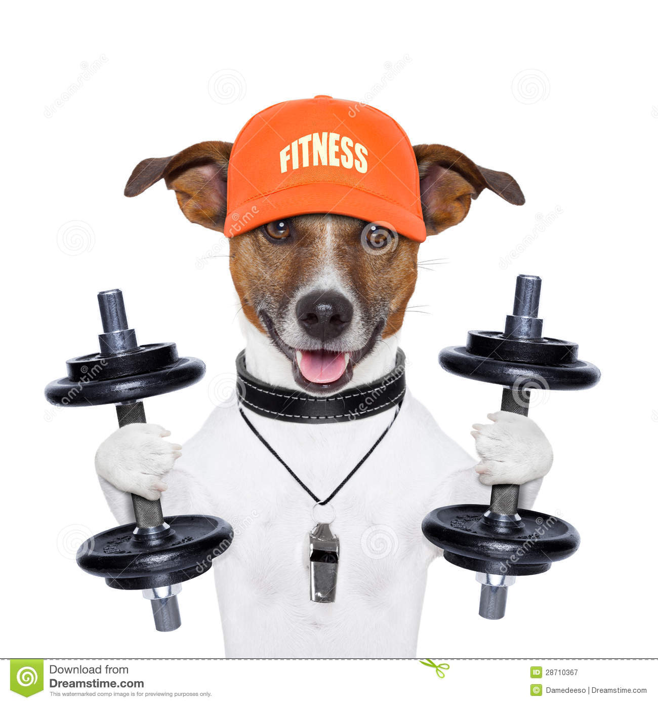 Funny Fitness Dog Royalty Free Stock Photography - Image ...