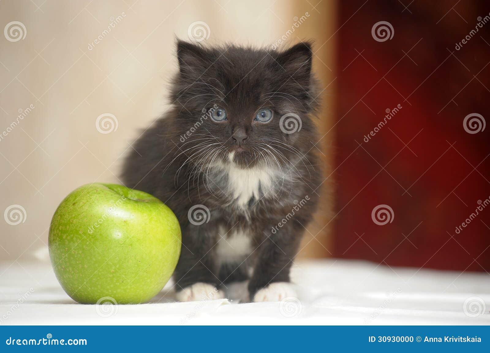 Funny fluffy black and white kitten