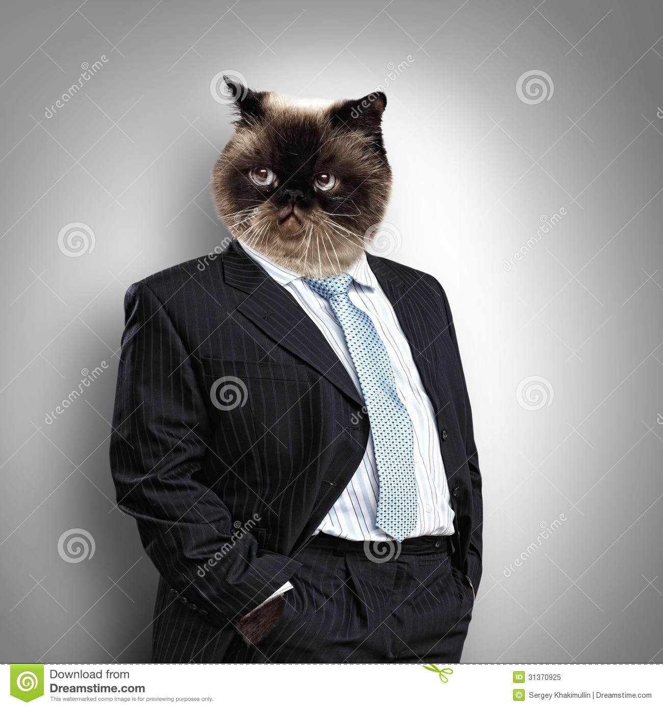 Funny Fluffy Cat In A Business Suit Royalty Free Stock ...